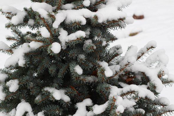 Kā rotāt Ziemassvētku eglīti?