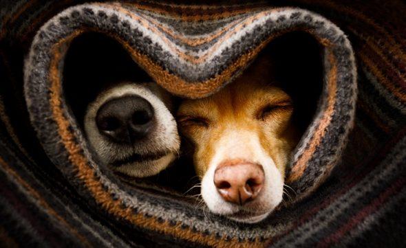 Trīs veidi, kā pateikt paldies par suņa beznosacījuma mīlestību
